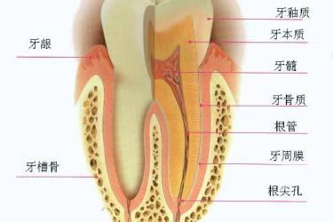 [大事记]生平第一次洗牙